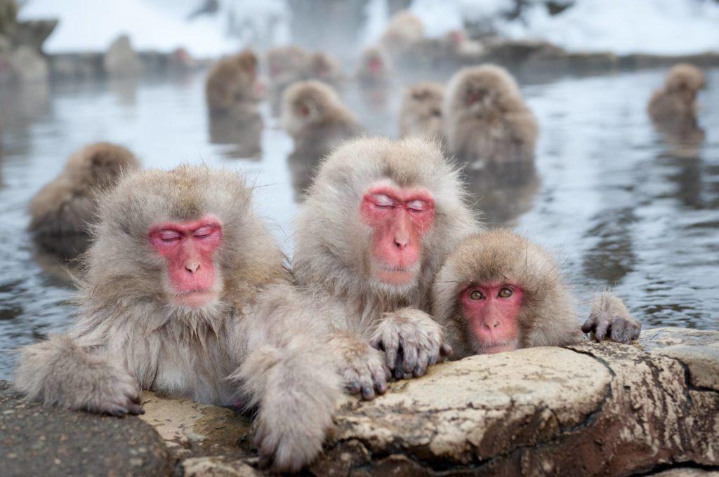 n-monkey-a-20170222-e1487681868306